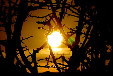 Photo of the sunset seen through hawthorn